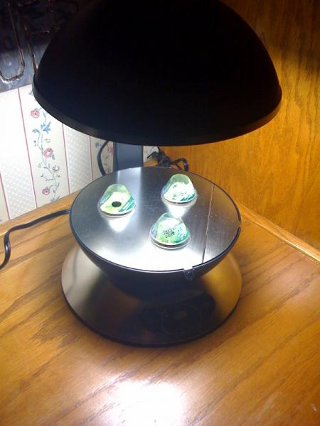 Aerogarden 3 with Tea